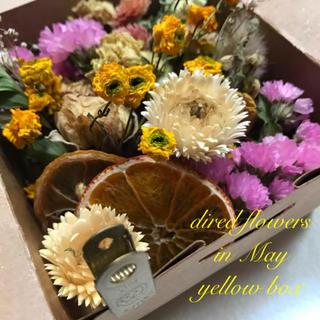 季節のお花定期便 5月 ドライフラワー yellow box(ドライフラワー)