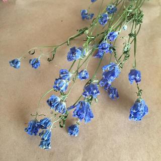 花材 デルフィニウムのドライフラワー3本(ドライフラワー)