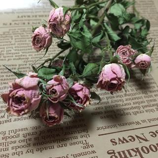 花材 ピンク薔薇のドライフラワー(ドライフラワー)