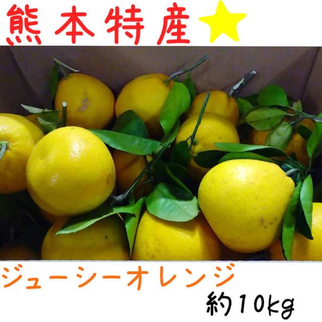 熊本産·✩̋·ジューシーオレンジ☆河内晩柑約10kg(家庭用)5 食品/飲料/酒の食品(フルーツ)の商品写真