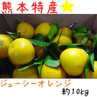 熊本産·✩̋·ジューシーオレンジ☆河内晩柑約10kg(家庭用)5(フルーツ)