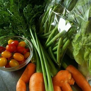 クール便 色々お野菜 80サイズ 多種類 野菜詰め合わせ(野菜)