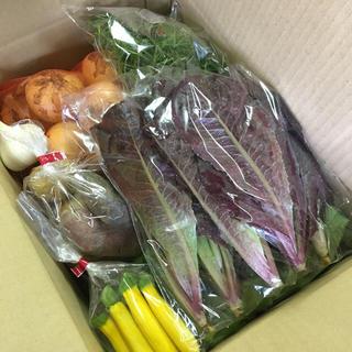 [送料込み、チルド便]愛知産 新鮮!季節の野菜セット!紫ジャガイモ、ロメイン他(野菜)