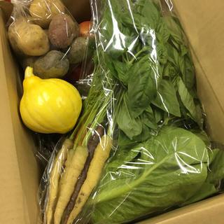 [送料込み]愛知産 新鮮!季節の野菜セット!人気のコリンキー、紫ジャガイモ他(野菜)