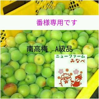 シブリン様専用☆南高梅20キロ(フルーツ)