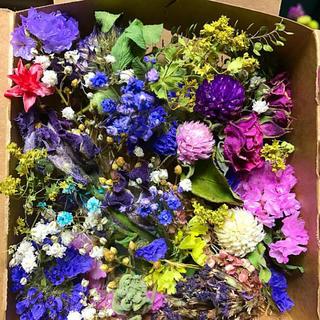 ドライフラワー 花材 BLUE BOX(ドライフラワー)