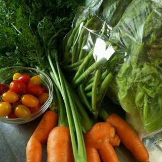 保冷発泡スチロール便 色々お野菜 100サイズ 野菜詰め合わせ(野菜)