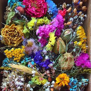 ドライフラワー 花材 #5 枝つき 敷き詰められるだけ(ドライフラワー)