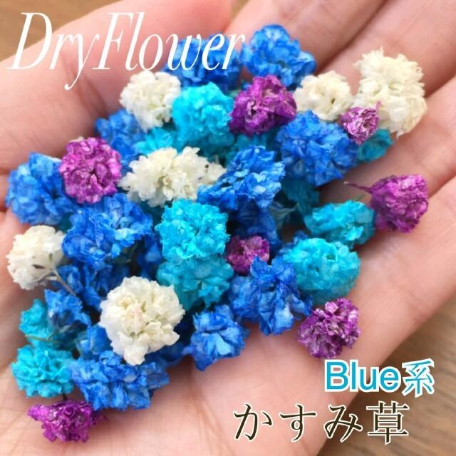 かすみ草 ドライフラワー 60個セット ブルー系 ハンドメイドの素材/材料(各種パーツ)の商品写真