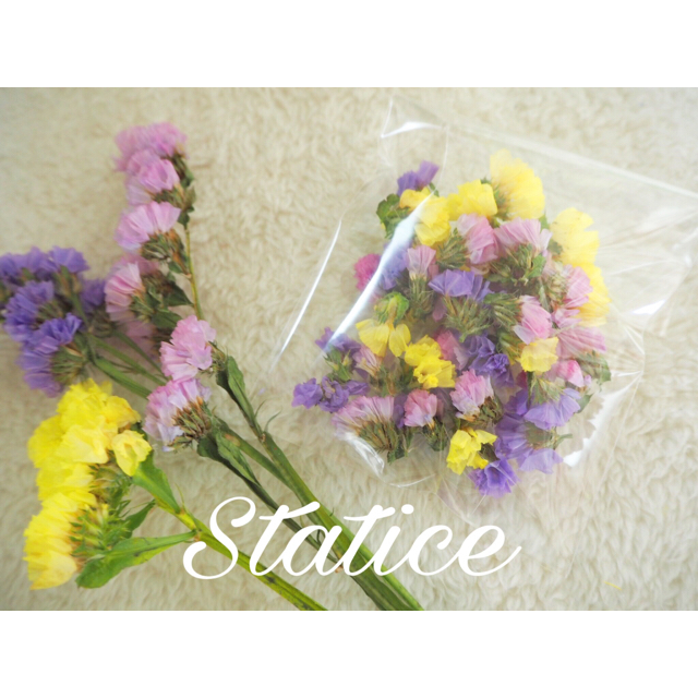 【再販】人気3色スターチス❁︎ドライフラワー❁︎花材 ハンドメイドのフラワー/ガーデン(ドライフラワー)の商品写真