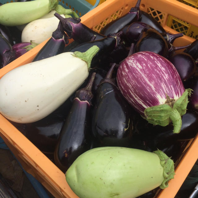 訳あり無農薬野菜セット 食品/飲料/酒の食品(野菜)の商品写真