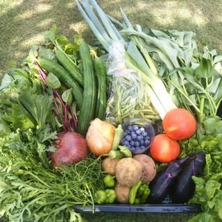採れたて♪土からこだわったお野菜60サイズ(野菜)