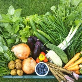 採れたて★土からこだわったお野菜60サイズ(1〜2暮らしにピッタリサイズ♪)(野菜)