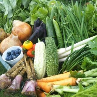 採れたて☆土からこだわったお野菜〜80サイズ〜(野菜)