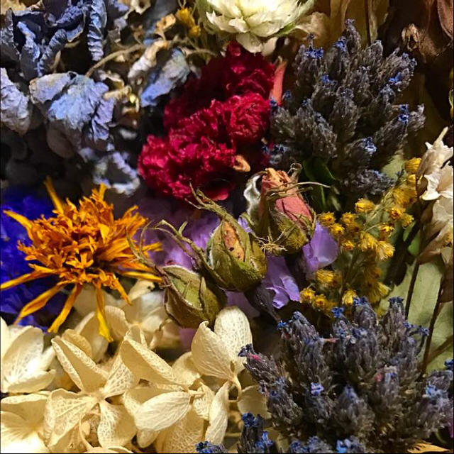 ドライフラワー 花材 #G 枝つき ナチュラル系 ハンドメイドのフラワー/ガーデン(ドライフラワー)の商品写真