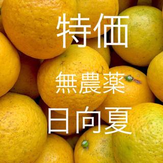 特価 小田原産 無農薬 完熟 日向夏 5kg弱 産地直送 送料込み(フルーツ)