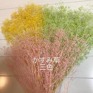 かすみ草のドライフラワー つぼみ 三色(ドライフラワー)