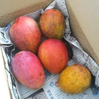 ワケあり沖縄県産マンゴー 1,3kg 自宅用マンゴー現品のみ
