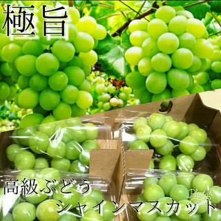《数量限定価格》高級ぶどうシャインマスカット 送料無料2(フルーツ)
