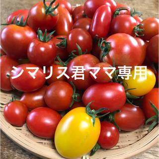 シマリス君ママ専用ミニトマトミックス(野菜)