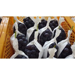 高級黒ぶとう種なし大粒ニューピオーネ1kg以上2房(フルーツ)