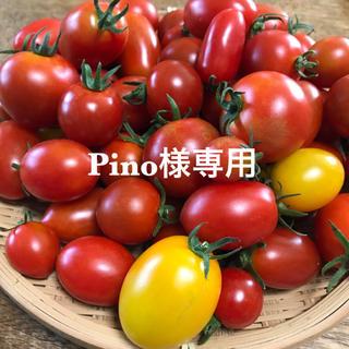 Pino様専用 ミニトマトミックス(野菜)